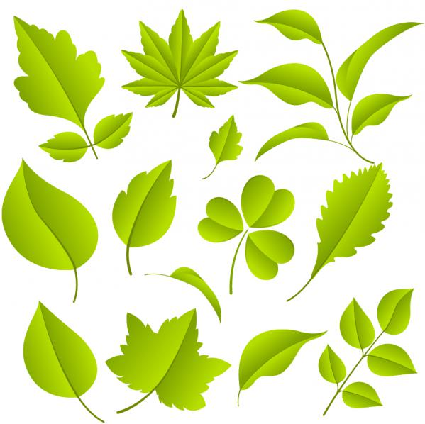 11種類の緑の葉 green leaves vector material