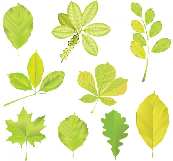 緑の葉のイラスト vector green tree leaves