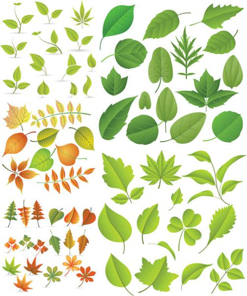 春の新緑のイラスト spring green leaves for design elements
