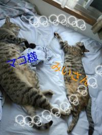 rakugaki_20120917_0001縺・convert_20120917100038