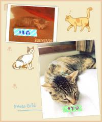 PhotoGrid_1347940542722_convert_20120919221158.jpg