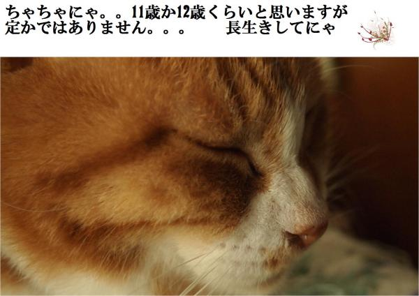 11_convert_20120525220445.jpg