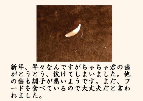 豁ッ_convert_20120104213421