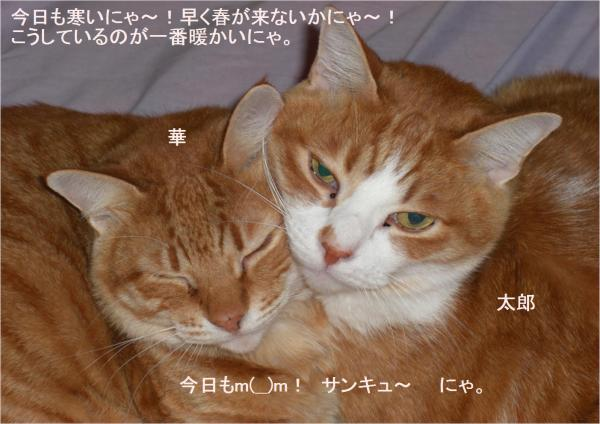繧オ繝ウ_convert_20120125204437