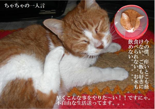 繧ォ繝ヲ_convert_20120126223218