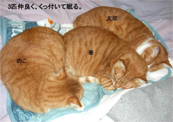 繝阪Ν_convert_20120128223407