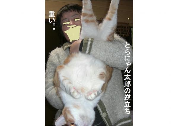 繧オ繧ォ_convert_20120131205806