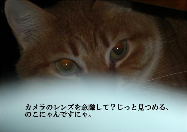 縺ョ縺ソ_convert_20120306221902