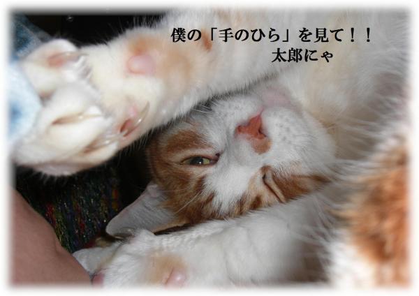 縺ヲ_convert_20120307221241