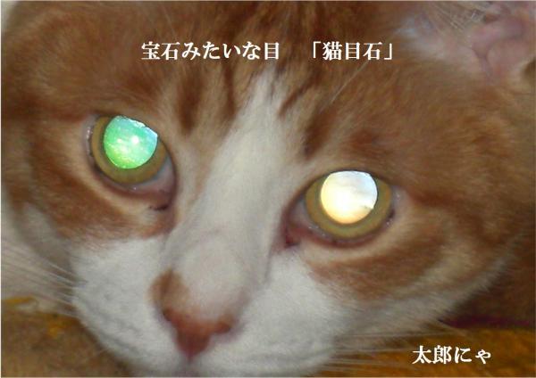 繝。_convert_20120311215113