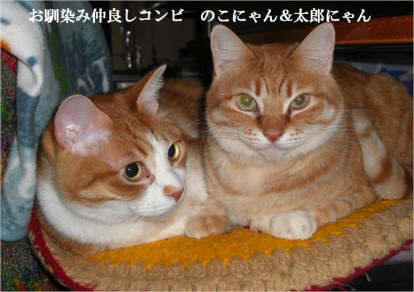 2蛹ケ_convert_20120312211043