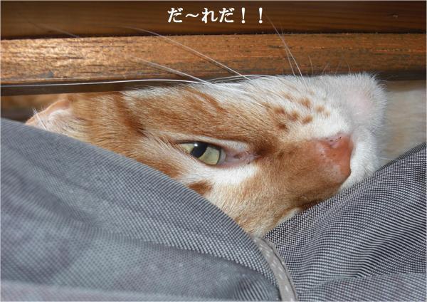 繝?繝ャ_convert_20120316212716