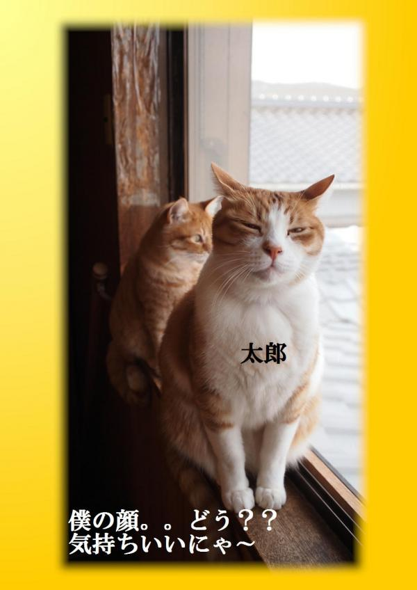 繝輔ぃ繧サ_convert_20120318205040