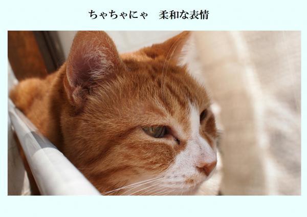 縺ォ繧・≧繧柔convert_20120321220805