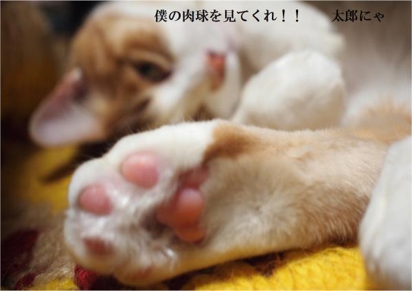 縺ォ縺柔convert_20120324213447
