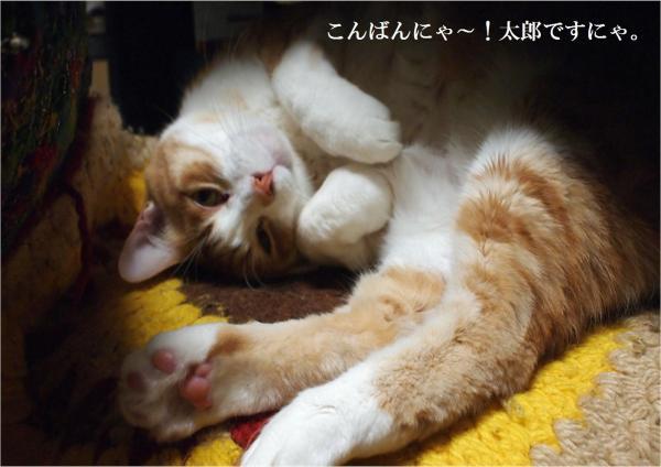 縺九▲縺薙≧_convert_20120324213420