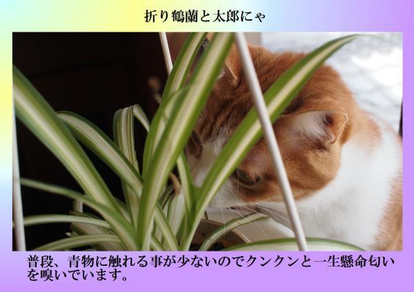 繧峨s_convert_20120328204706
