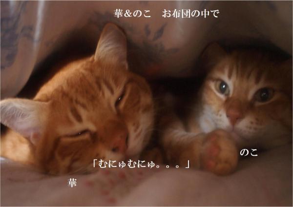 縺ュ縺シ縺狙convert_20120329211842