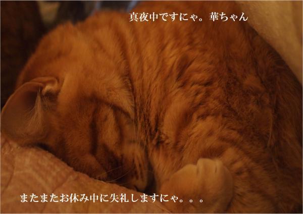 繧?縺ォ繧・convert_20120329211911