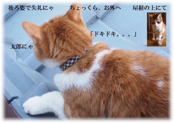 繧・・_convert_20120407223229