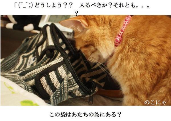 縺オ縺上m1_convert_20120417223913