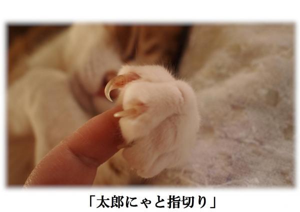 繧・・縺阪j_convert_20120420221002