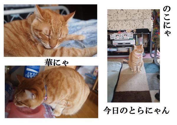 譌・縲・convert_20120420221030