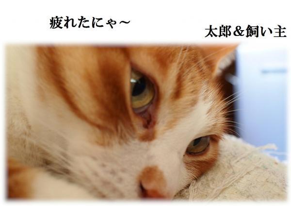 縺、_convert_20120424215110