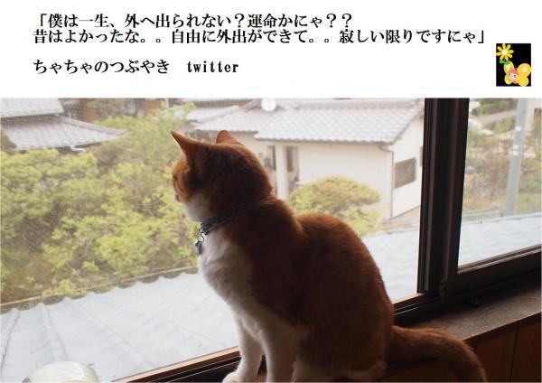 縺、縺カ_convert_20120426214657