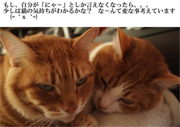 縺薙→縺ー_convert_20120427214408