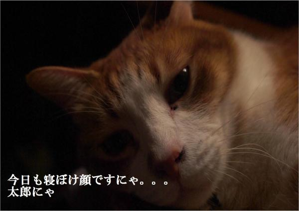 縺ュ縺シ_convert_20120430193516