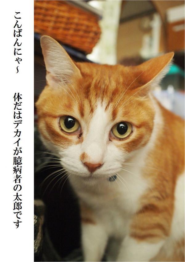 縺翫¥_convert_20120502205828