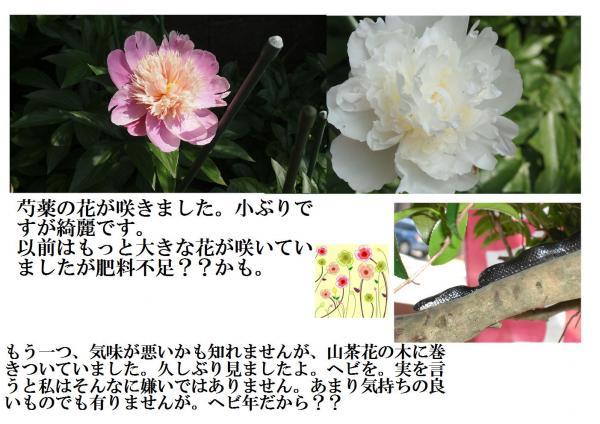 蠎ュ_convert_20120506210407