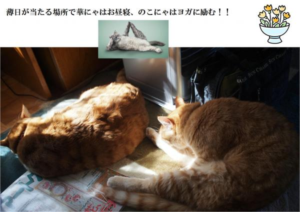 繝ヲ繧ャ_convert_20120507212415
