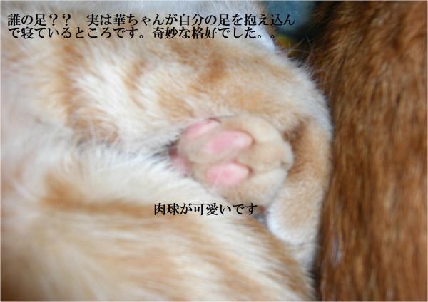 縺ォ縺柔convert_20120509215018