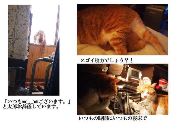 繧ケ繧エ_convert_20120510225540