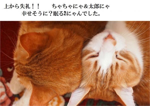 2縺ォ繧・s_convert_20120512220411