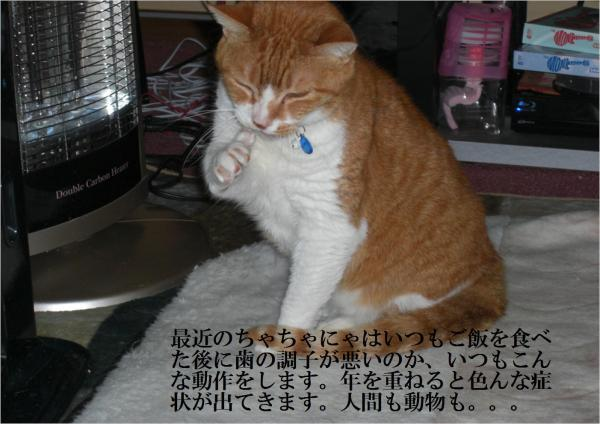 豁ッ_convert_20120512220432