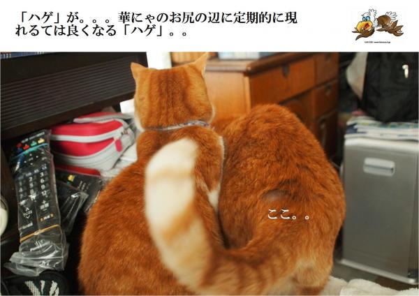 縺ッ縺胆convert_20120521221712