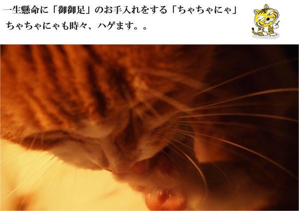 縺ッ縺偵??2_convert_20120521221653