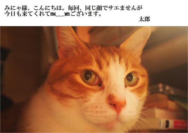 縺セ縺Юconvert_20120522213350