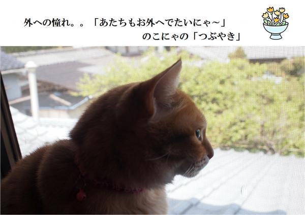 縺翫◎縺ィ_convert_20120522213332