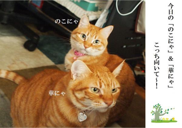 縺薙▲縺。_convert_20120526215951