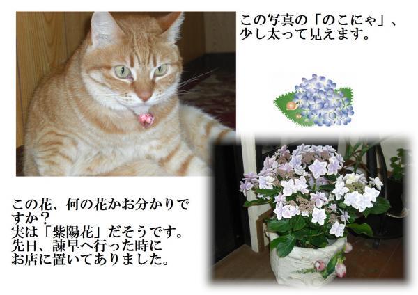 縺ゅ§縺輔>_convert_20120527192513