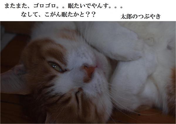 縺ュ繧?_convert_20120528214128