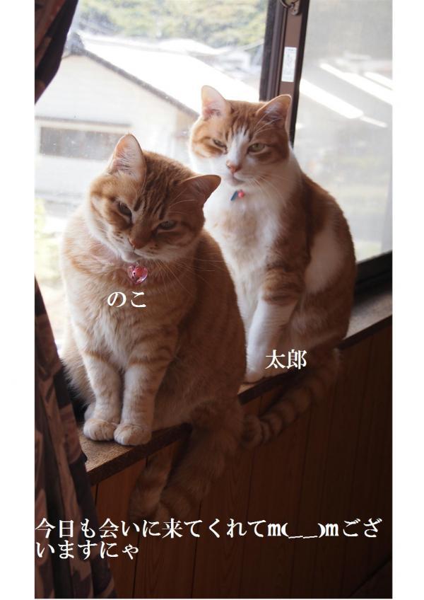 縺ォ繧ダconvert_20120605220050