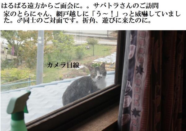 繧オ繝神convert_20120607220414