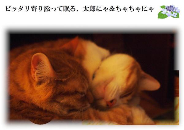 縺ュ_convert_20120621221042