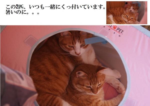 繝吶ち_convert_20120624192905