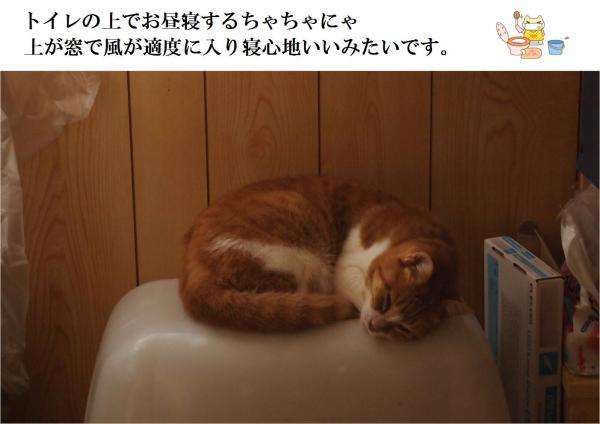 繝医う繝ャ_convert_20120629221229